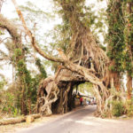 穴のあいた不思議な巨樹、ブヌッ ボロン!